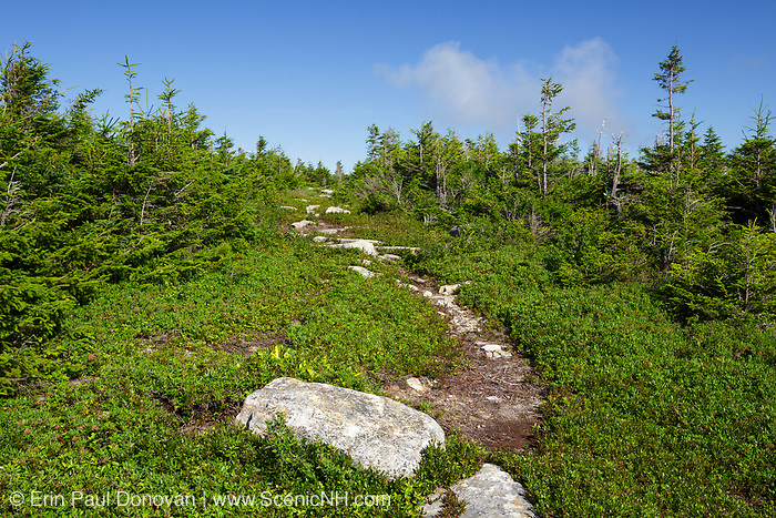 The Mittersill-Cannon Trail on Mittersill Mountain in the White Mountains of New Hampshire during the summer season.