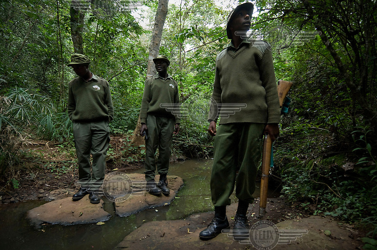 Forest rangers patrolling the forest, looking for people who have entered illegally and are cutting trees. Ngong forest is a fenced and  protected sanctuary. It is a nature reserve that has an abundance of animals and wildlife and acts as a physical division between the rich and poor areas of Nairobi. Illegal deforestation is a serious problem as the forest is full of rare, hardwood species that are sold to souvenir carvers in Nairobi who make wooden animals in all sizes for tourists in Kenya.