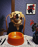 Illustration for feeding your dog well. Tooth paste was the trick to get this one to lick his lips in the studio, where I built the set at the Orange Co. (CA) Register. Jim Mendenhall Photo