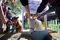 Petting ponies on Drill Field.<br />  (photo by Megan Bean / &copy; Mississippi State University)