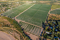 Aerial view of field of culture in ejido of San Pedro el Saucito. Community dedicated to agriculture and livestock.<br /> &nbsp; (Photo: Luis Gutierrez / NortePhoto.com)...<br /> Vista a&eacute;rea de campo de cultivo en ejido de San Pedro el Saucito. Comunidad dedicada a la agricultura y ganader&iacute;a. <br />  (Foto: Luis Gutierrez / NortePhoto.com)