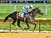 Tizsomethingroyal winning at Delaware Park on 9/7/16