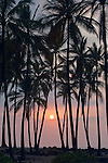 USA, HI, Puuhonua O Honaunau National Historic Park, Place of Refuge, Palm Tree Sunset