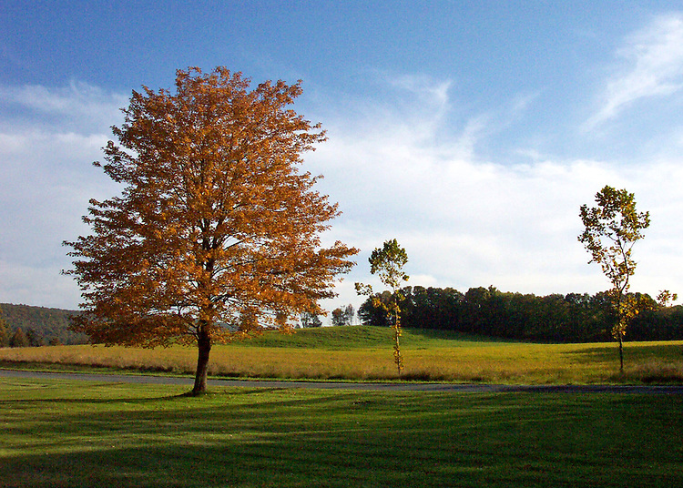 Fall in New York State presents us with wonderful colors like this lone, sun-touched rust tree standing by itself in a field of greens and gold against a crisp blue sky inPostenkill, New York
