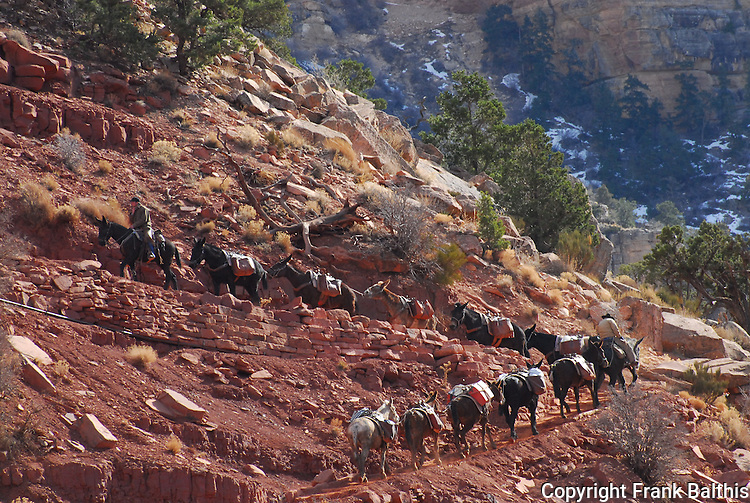 Mule train, Grand Canyon South Kaibab Trail