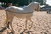 Centre d'equitation du Roc a Sainte-Fereole