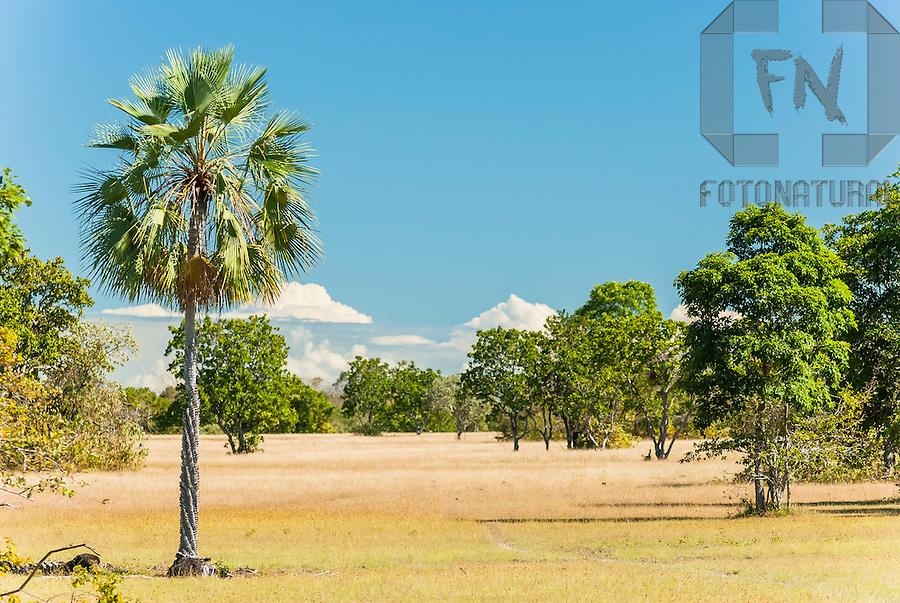 &Aacute;rvores nas savanas de Copernicia (savanas brasileiras) | Trees in the savannas of Copernicia (brazilian savannas)<br /> <br /> LOCAL: Campo Maior, Piau&iacute;, Brasil<br /> DATE: 06/2008<br /> &copy;Pal&ecirc; Zuppani