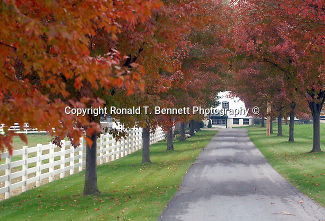 Virginia barn with autumn leaves, white fence with red orange autumn leaves, autumn leaves, leaf, Commonwealth of Virginia, Virginia, American State, Atlantic Coast, Southern United State, birthplace of eight US Presidents,
