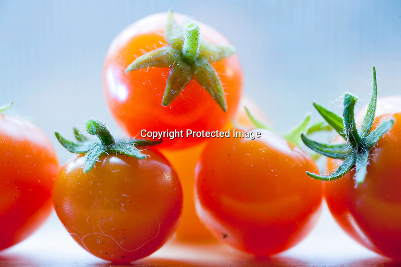 Windowsill Tomatoes