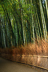 Arashiyama bamboo forest scenery in bright morning sunshine, Kyoto, Japan. Image © MaximImages, License at https://www.maximimages.com