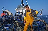 """Europe/France/Bretagne/29/Finistère/Le Conquet: Pêche au homard bleu sur le """"Louarn Ar Mor"""" avec Alain Le Bras pêcheur breton - AUTORISATION N°265"""