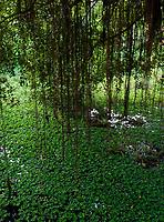 Monastery life and generic scenery in Battambang, Cambodia Thick vegetation