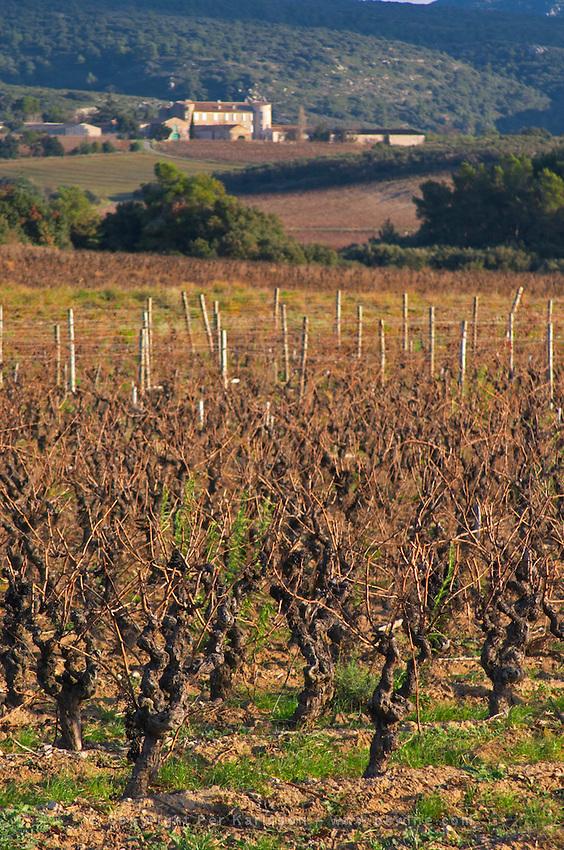 Chateau Villerambert-Julien near Caunes-Minervois. Minervois. Languedoc. Vines trained in Gobelet pruning. France. Europe. Vineyard.