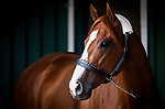 BALTIMORE, MD - MAY 16:  Justify at Pimlico Racecourse on May 16, 2018 in Baltimore, Maryland. (Photo by Alex Evers/Eclipse Sportswire/Getty Images)