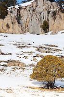 Mountain Lion, Jackson Hole Wyoming