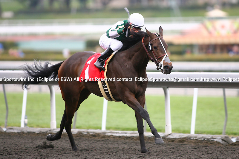 06 March 2010: Seedless and Alonso Quinonez win an allowance race at Santa Anita Park in Arcadia, CA..