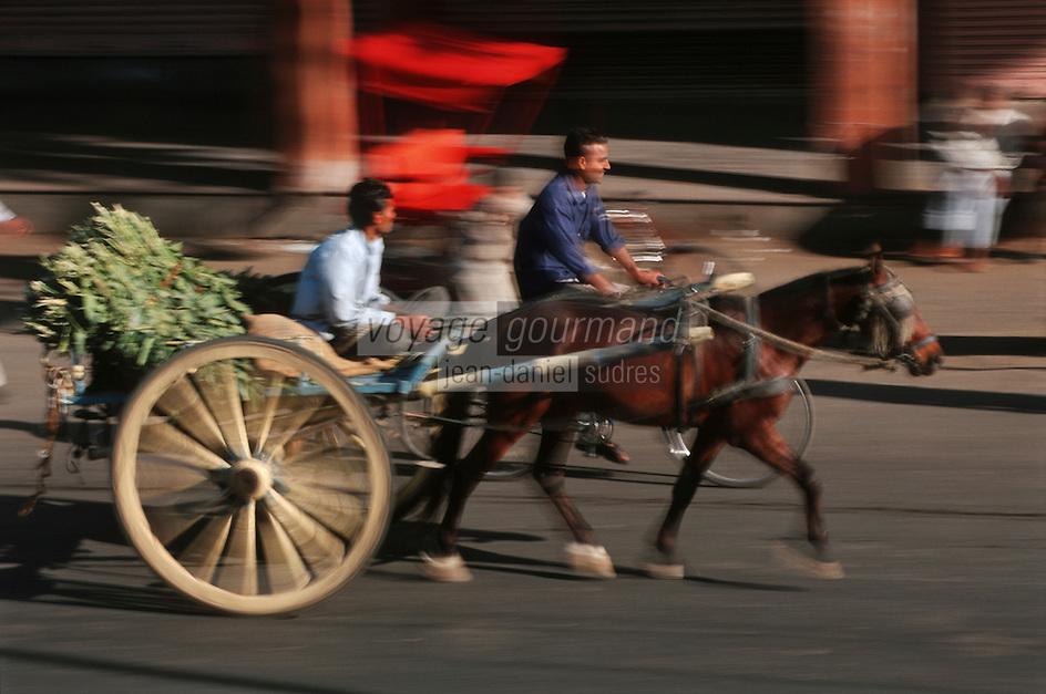 Asie/Inde/Rajasthan/Jaipur: Attelage avec cheval prés porte Tripolia se rendant au marché