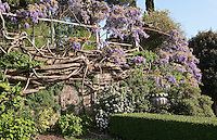 The garden at La Foce is a mass of purple wisteria in summer