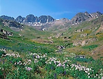 Wildflowers in American Basin, San Juan Mounatins, Colorado, .  John leads wildflower photo tours into American Basin and throughout Colorado. All-year long.