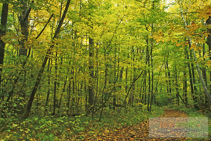 Woodland Trail, Cheesequake State Park, Middlesex County, New Jersey