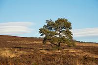 Unusual cloud formation on Longridge Fell near Clitheroe, Lancashire.