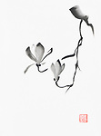 Beautiful black and white magnolia branch with two flowers artistic oriental style illustration, Japanese Zen Sumi-e black ink painting on white rice paper background