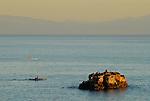 Kayaking near sea lions on rock at Lighthouse Point in Santa Cruz