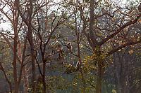 Asia,India,Madhya Pradesh,Bandhavgarh National Park