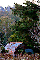 Victorian country side old shed in forest beautiful scenery N A Ebden photo