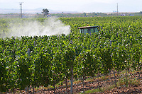 A vineyard tractor spraying with treatment for diseases between the rows of vines. Vranac grape variety. Vineyard on the plain near Mostar city. Vines equipped with black rubber or plastic tubes for artificial drip irrigation watering. Hercegovina Vino, Mostar. Federation Bosne i Hercegovine. Bosnia Herzegovina, Europe.