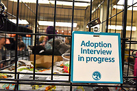 MANHATTAN ,NEW YORK, USA -JUNE 02:   Best Friends Pet Super Adoption held its annual adoption event bringing together more than twenty pet rescue organizations  and hundreds of dogs and cats into contact with people seeking to open their hearts & homes to an animal in need on June 2, 2017 in New York. Joana Toro/VIEW press
