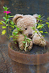 A stuffed teddy bear leans on a clay pot.