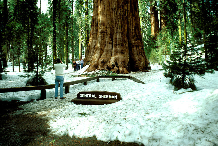 CA: Sequoia-Kings Canyon National Park, General Sherman Tree, Largest of the Sequoia trees, sequoiadendron giganteu, largest tree on earth         .Photo Copyright: Lee Foster, lee@fostertravel.com, www.fostertravel.com, (510) 549-2202.Image: catree209.