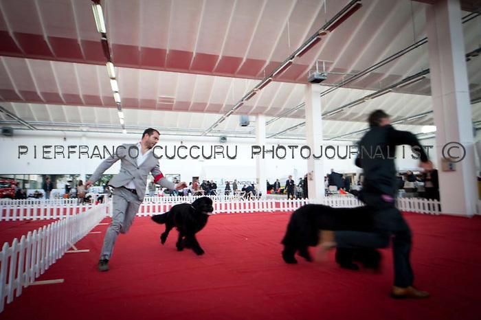 L'handler Maurizio Farci con i suoi cocker americani all'esposizione canina internazionale di sassari e chiaramonti 16-17 febbraio 2013