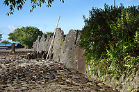 Ahu of Marae Taputapuatea, c. 1000 AD, a large religious and ceremonial temple site with a 60 x 45m stone courtyard and an ahu or altar made from 3m high standing stones cut from coral, at Taputapuatea, at Te Po, in the Opoa valley, on the island of Raiatea, in the Leeward Islands, Society Islands, French Polynesia. Against the stones is a pile of ritual offerings and carved wooden Unu representing the guardian of an ancestor. This marae marks the spot where Ta'aroa, creator and father of all Polynesian gods, first stepped on the earth. In the 17th century, it was rededicated to the god Oro, son of Ta'aroa and god of beauty, fertility and war. This site was a meeting place and sacrificial site for travellers from all over the Pacific. Picture by Manuel Cohen