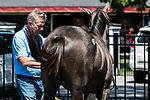 08-05-19 FT Sale Woodford Thoroughbreds Saratoga