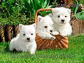 Marek, ANIMALS, REALISTISCHE TIERE, ANIMALES REALISTICOS, dogs, photos+++++,PLMP3208,#a#, EVERYDAY