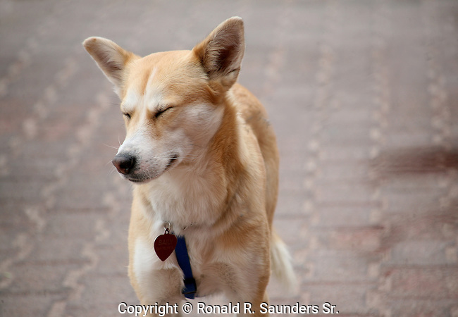 DOG SHOW ENTRANT (1)