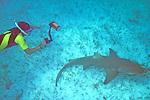 314 Lemon Sharks, Bimini