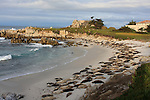 Harbor seals in Pacific Grove
