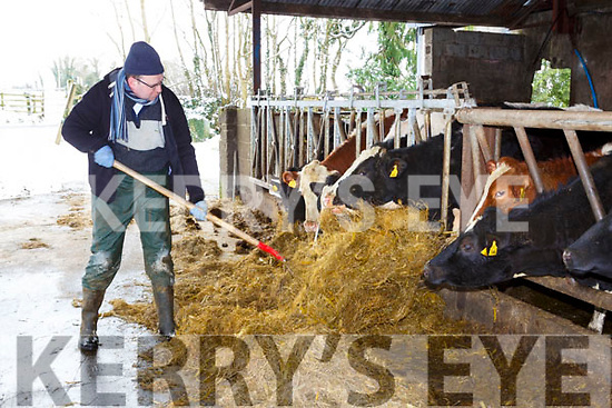 James McCarthy feeds his cattle during the snow blizzard Friday morning