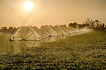 Idaho, South Central, Twin Falls. Crops being irrigated in the morning sun.