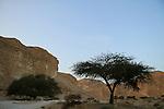 Israel, Negev, Acacia tree in Nahal Barak
