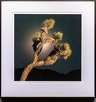 """Framed Size 22""""h x 21.5""""w, $500.<br /> Frosted Walnut Nielsen 15 metal frame"""