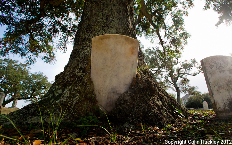 A Live Oak's tight embrace holds the tombstone of Rebecca Robinson (died 1869) in Pensacola's St. Michael's Cemetery.  <br /> <br /> COLIN HACKLEY PHOTO