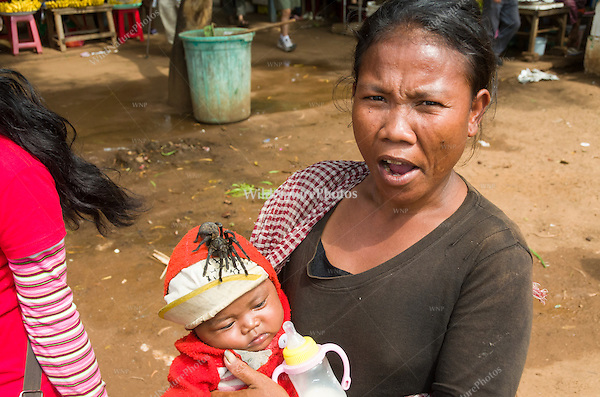A mother displays an edible Tarantula (Haplopelma albostriatum) on her infant child to tourists while begging. (Cambodia)