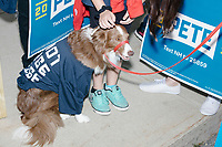"""Supporters of Democratic presidential candidate Pete Buttigieg, including a dog wearing a """"Boot Edge Edge"""" shirt, wait to march before the Labor Day Parade in Milford, New Hampshire, on Mon., September 2, 2019. Candidates Bernie Sanders and Vermin Supreme were the only candidates who marched in the parade this year."""