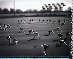 USA, Major League Baseball, Spring Training, Florida, February 2005.