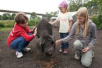 Chinesisches Maskenschwein, Masken-Schwein, Hausschwein-Rasse, Schwein, Hausschwein, Mei Shan