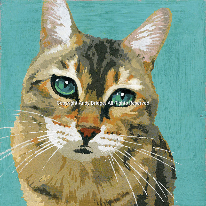 Portrait of tabby cat ExclusiveImage